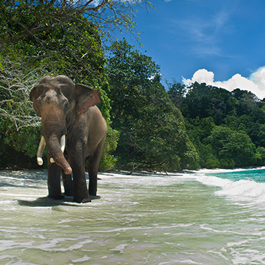 Elephant Beach Tour