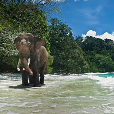 Trek to Elephant Beach